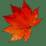 autumn-1608537_960_720-150x150