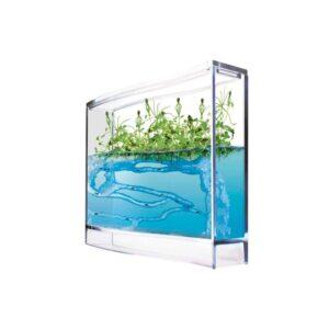 Mieren Aquarium Gel Antquarium antq-6146661