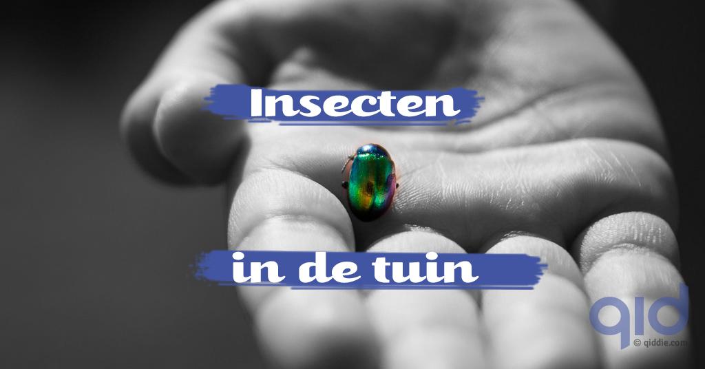 blog-natuur-insecten2