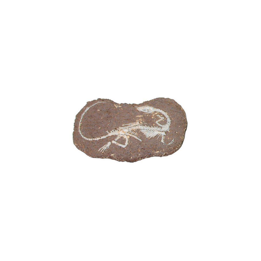 Opgraaf Kit Coelophysis Fossiel