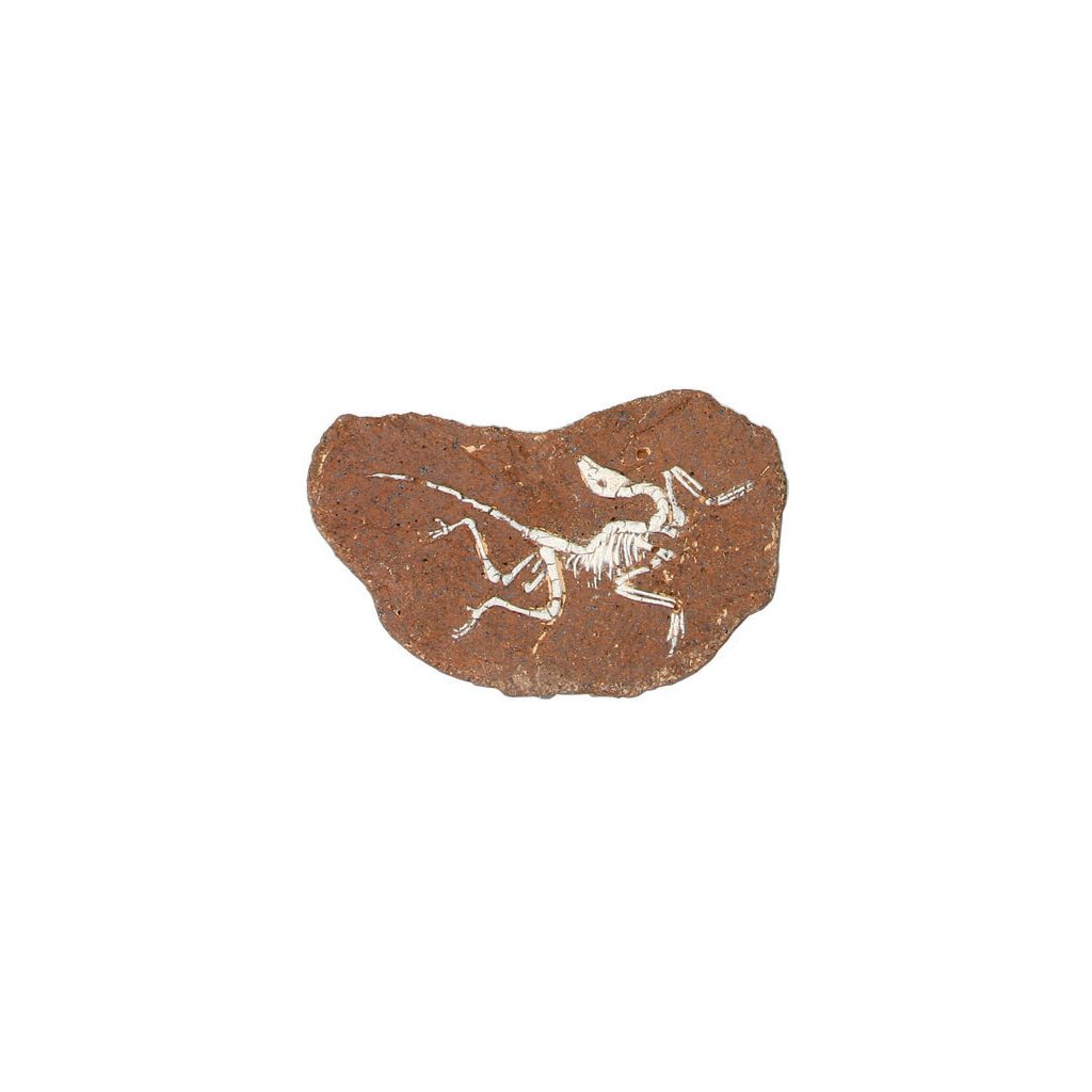Opgraaf Kit Archaeopteryx Fossiel