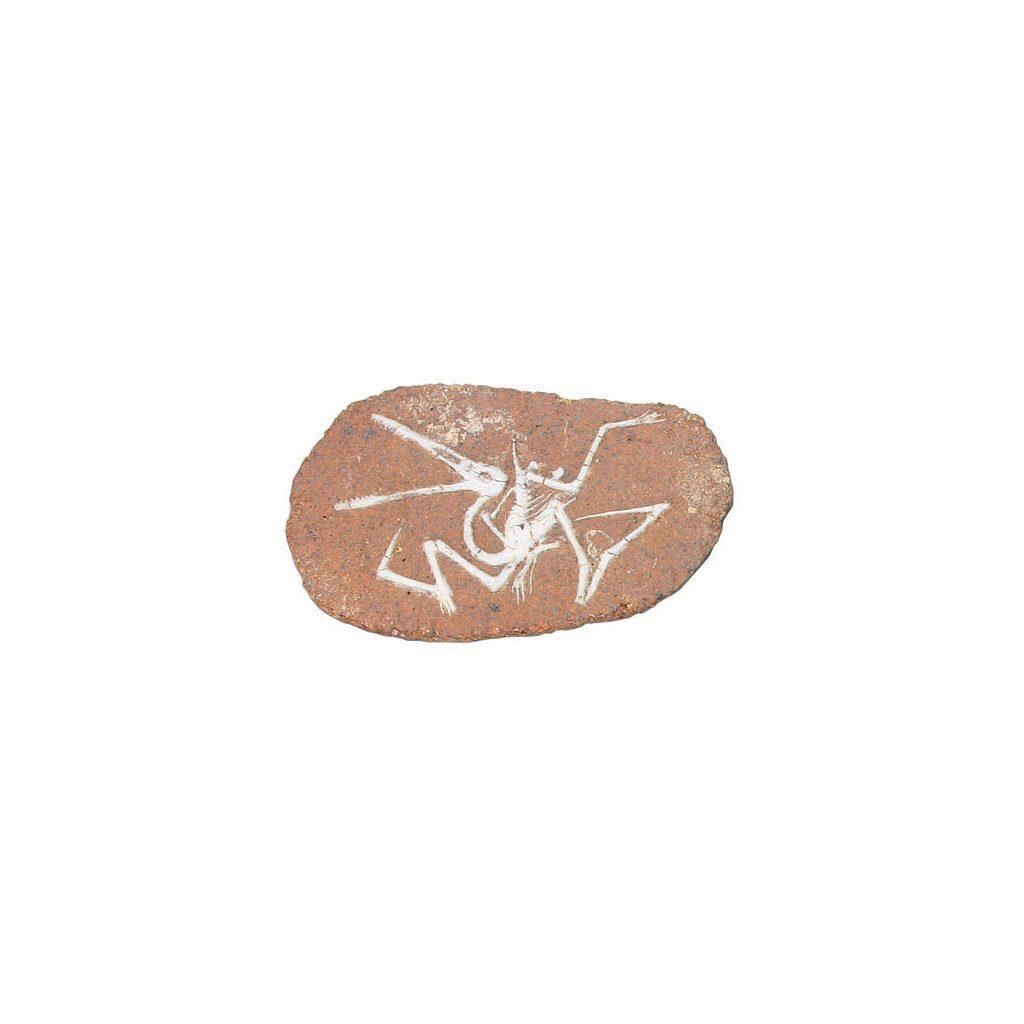 Opgraaf Kit Pterodactylus Fossiel