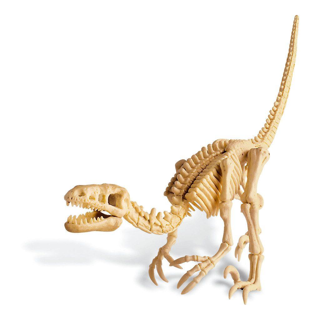Dino Opgraven Speelgoed Velociraptor