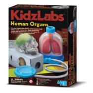Organen Onderzoeken