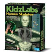 Skelet Onderzoeken