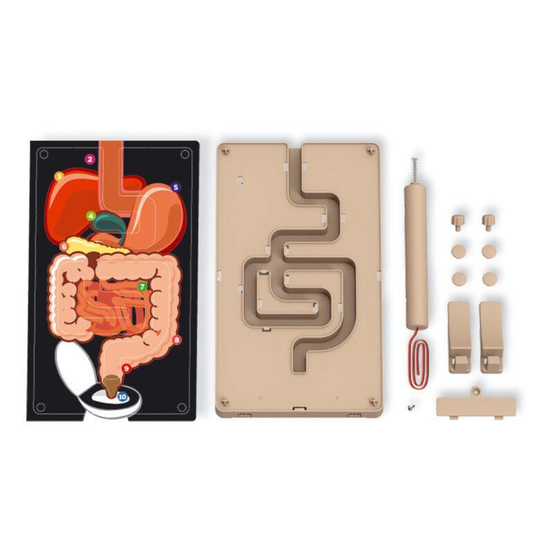 Spijsverteringssysteem Stresstester Maken Doos Verpakking 4M 4Msp-5603386