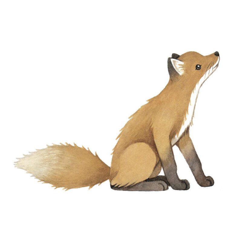 Vintage Fox Muursticker L Forest Lilipinso Vos Muur Sticker Groot Lief Schattig QIDDIE.com lili-S1448
